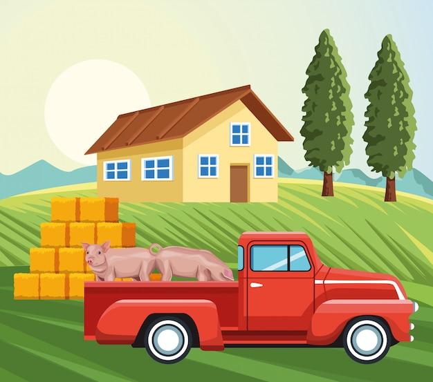 豚ハウス干し草ba草木と農業ピックアップ
