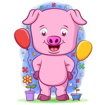 Маленький розовый поросенок стоит возле двух воздушных шаров