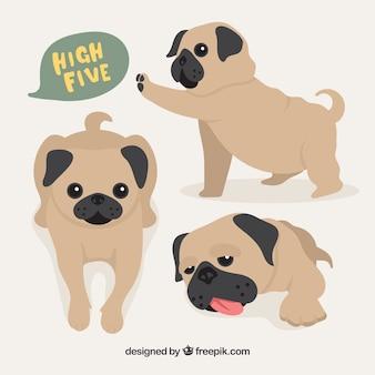 Baby pug dogs