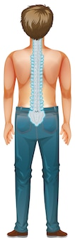 Back of male human with back pain