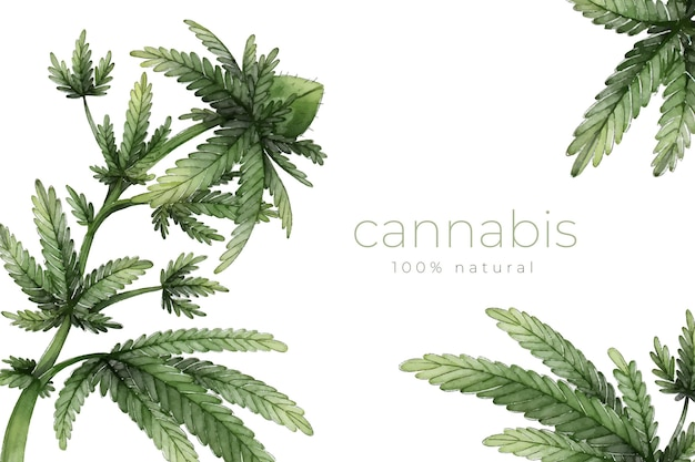 Background of botanical cannabis leaves