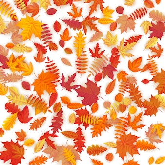 Background of colored wet autumnal maple leaves.