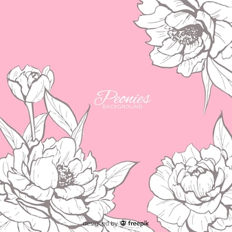 Background concept of peony flowers