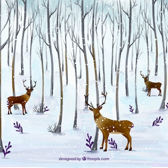 Background of deer in the forest