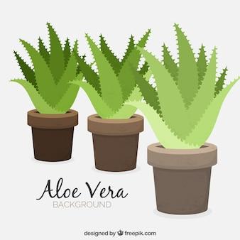 Background of flowerpots with aloe vera