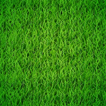 Background of fresh green grass, vector illustration