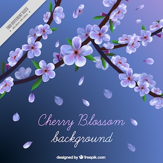 Background of cherry blossoms and petals