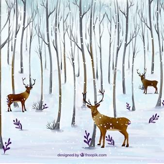Фон оленя в лесу
