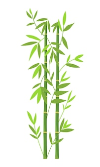 緑の竹の背景。白い背景の上の竹の幹と葉。