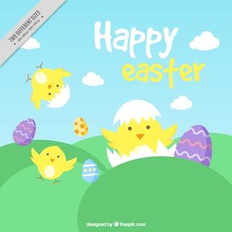좋은 병아리와 부활절 달걀의 배경