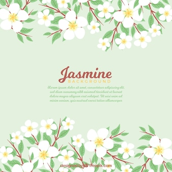 Background of pretty jasmine leaves