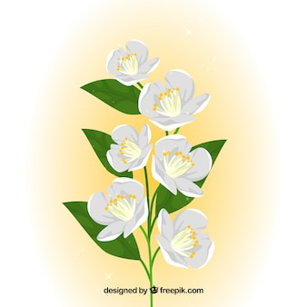Background of pretty white flowers