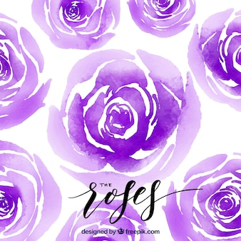 Background of purple watercolor roses