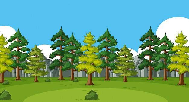 森の中の多くの松の木と背景シーン
