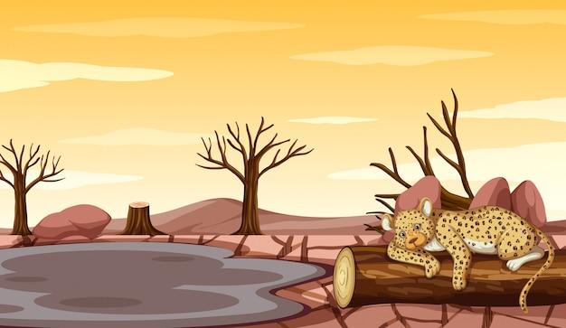Scena di sfondo con tigre e siccità