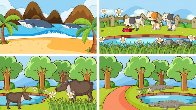 Background scenes of animals in the wild