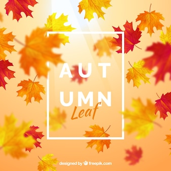 Background with autumn leaf