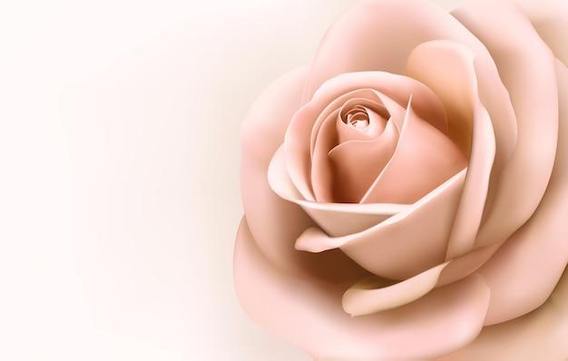 아름 다운 핑크 장미와 배경입니다.