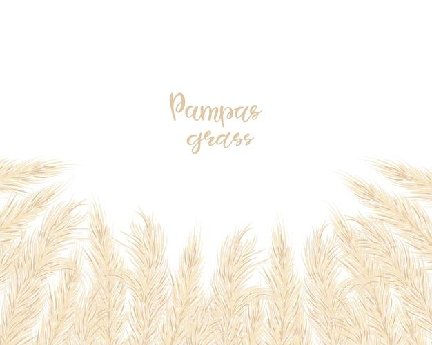 마른 팜파스 잔디와 배경입니다. boho 스타일의 꽃 장식 요소입니다. 복사 공간이 있는 평평한 위치, 위쪽 보기. 벡터 일러스트 레이 션