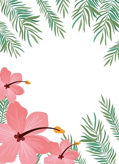 Background with flower and leafs of summer