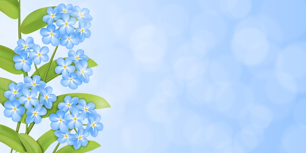 Background with the forget me not  flowers and green leaves.