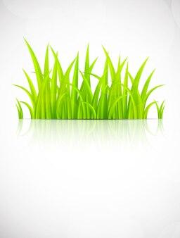 緑の芝生と背景。