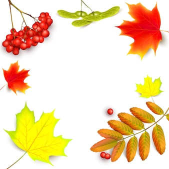 Background with maple autumn leaves and rowan branches with ashberry .