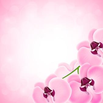 Фон с орхидеей