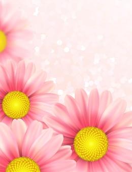 ピンクのデイジーの花の背景。図