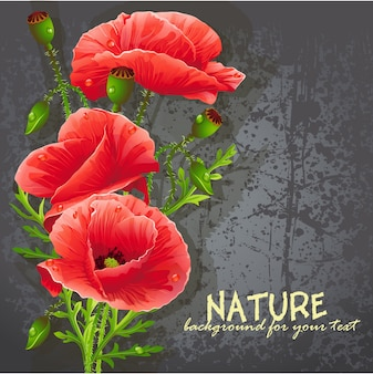 Background for your text with red poppies