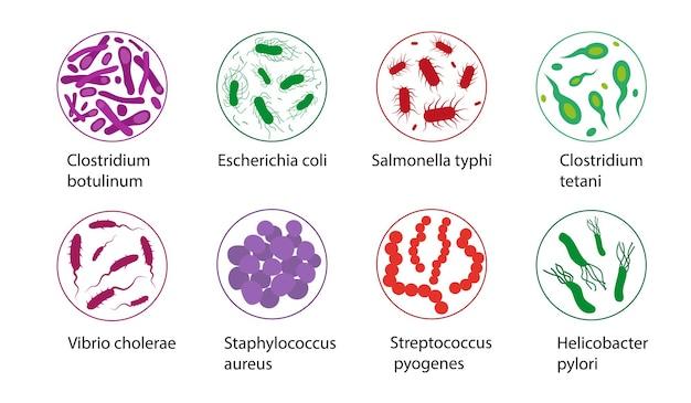 白い背景に分離された悪玉菌セット微生物アイコン