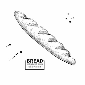 Baguette bread drawing. bakery product sketch.