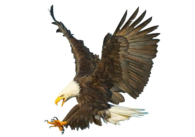 Bald eagle attack hand draw on white background.
