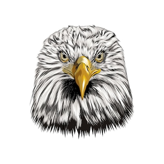 Bald eagle head portrait from a splash of watercolor
