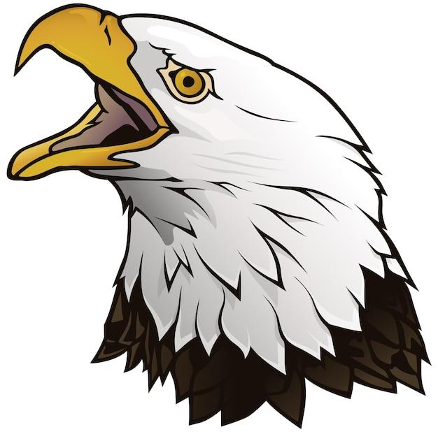 Портрет белоголового орлана, изолированные на белом фоне