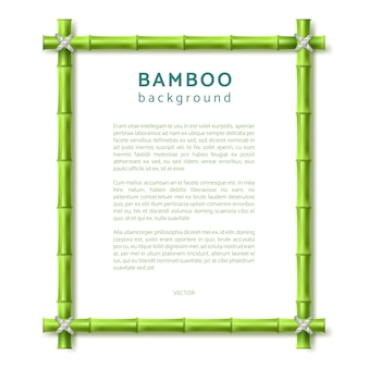 Bamboo frame. eco spa resort vector background
