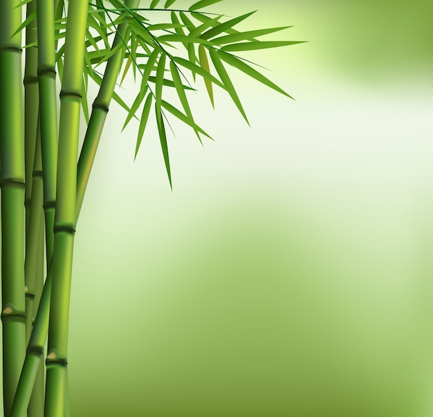 Bamboo grove isolated with green background