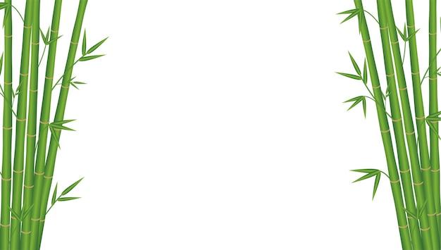 흰색 배경에 대나무 일본 스타일