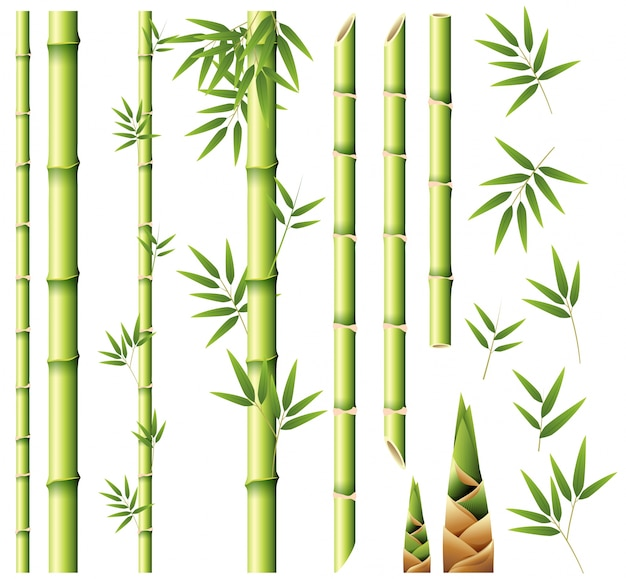 bamboo vectors photos and psd files free download rh freepik com bamboo vector art bamboo victoria open tables