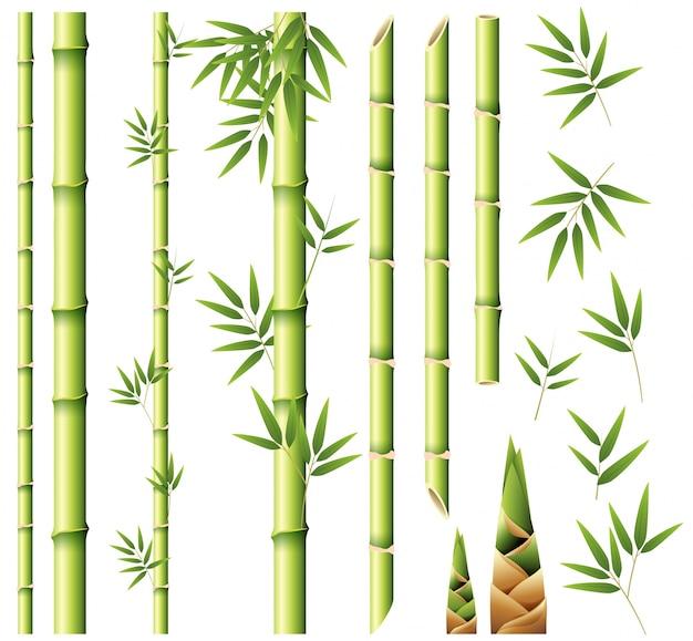 bamboo vectors photos and psd files free download rh freepik com bamboo vector free download bamboo vector free download