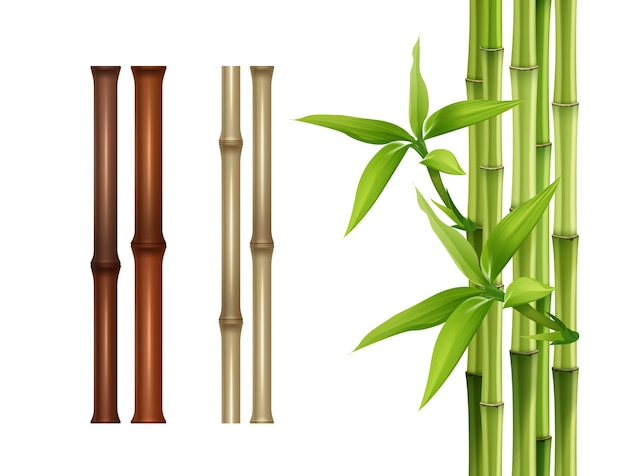 Bamboo sticks isolated on white background.