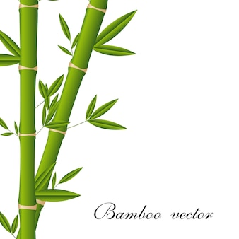 Bamboo sticks with space for copy
