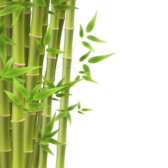 Лист бамбукового дерева, стебель растения и палка.