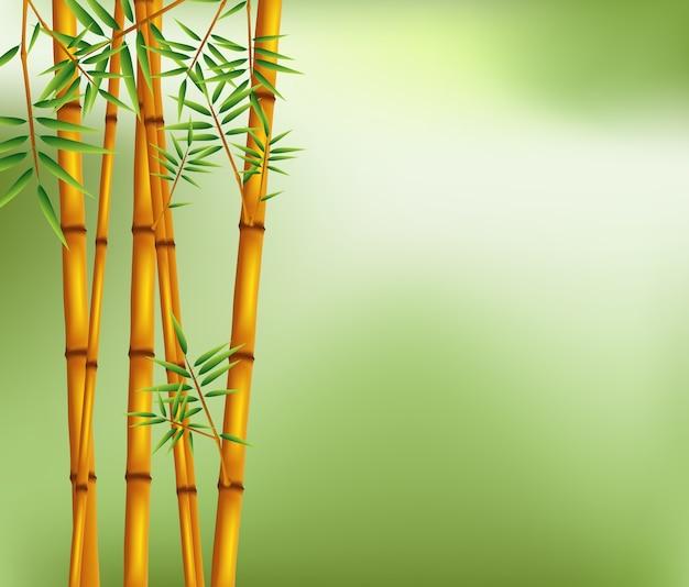 Бамбуковое дерево на зеленом фоне