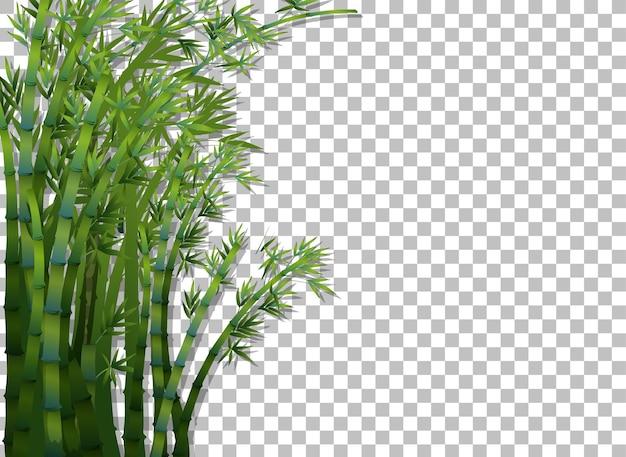 透明な背景に竹の木