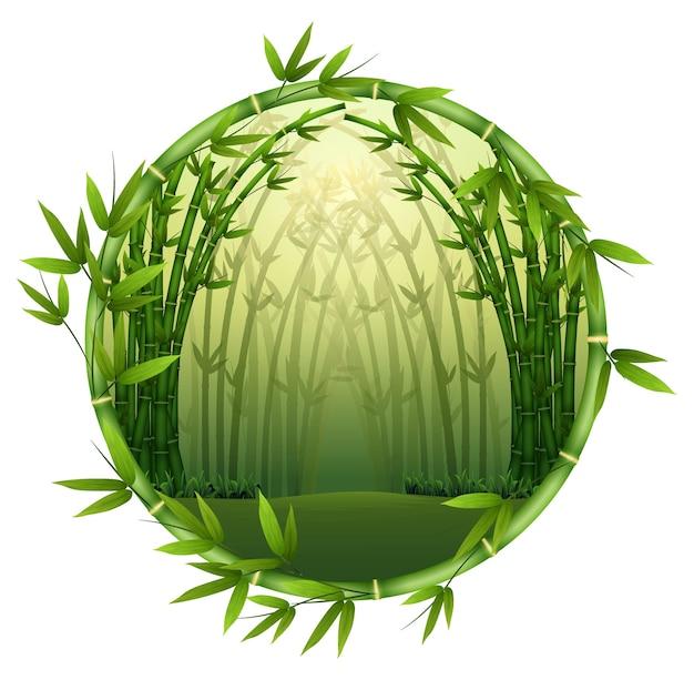 フレーム自然の中の竹の木