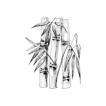 잎이 있는 대나무 나무. 벡터 빈티지 해칭 검은 그림입니다. 흰색 배경에 고립. 손으로 그린 디자인