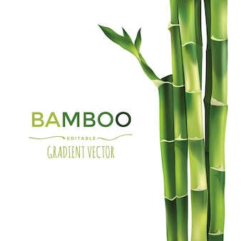 Бамбук векторная иллюстрация