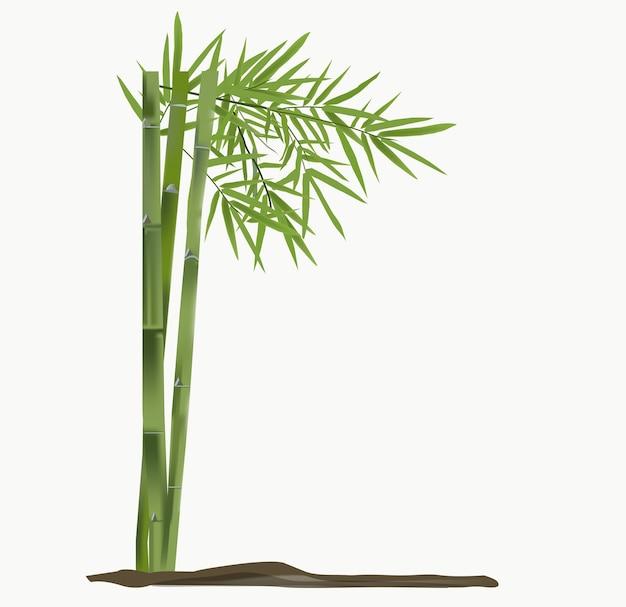 대나무 벡터