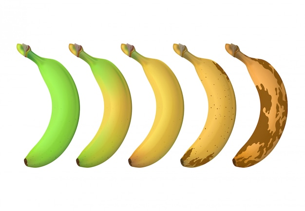 Banana fruit ripeness levels from green underripe to brown rotten. vector set isolated